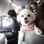 Viajar con tu mascota en avion